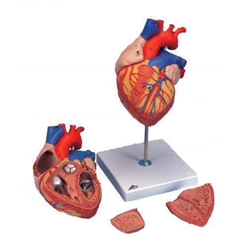 Herz, 2-fache Größe, 4-teilig G12