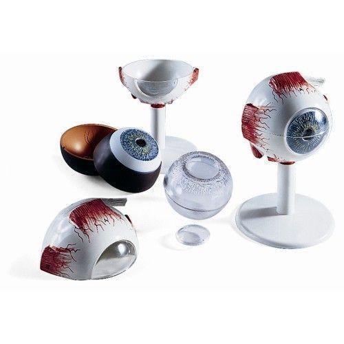 Auge, 3-fache Größe, 6-teilig F15