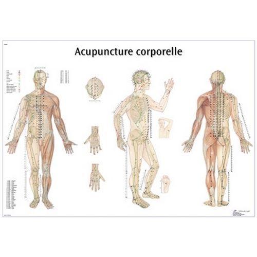 Lehrtafel -  Akupunktur des Körpers VR2820L