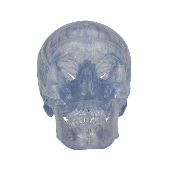Klassik-Schädel, transparent, 3-teilig A20/T