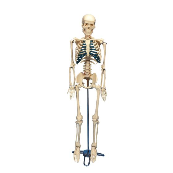 Schreibtisch-Skelett W33000